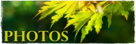 autumn-leaves-photos